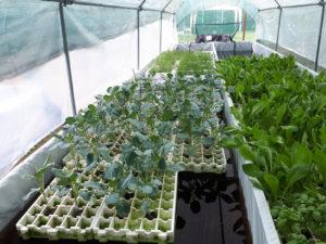 Piante coltivabili attraverso l'acquacoltura
